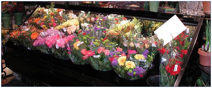 Refrigeration---Floral-Case750x320W